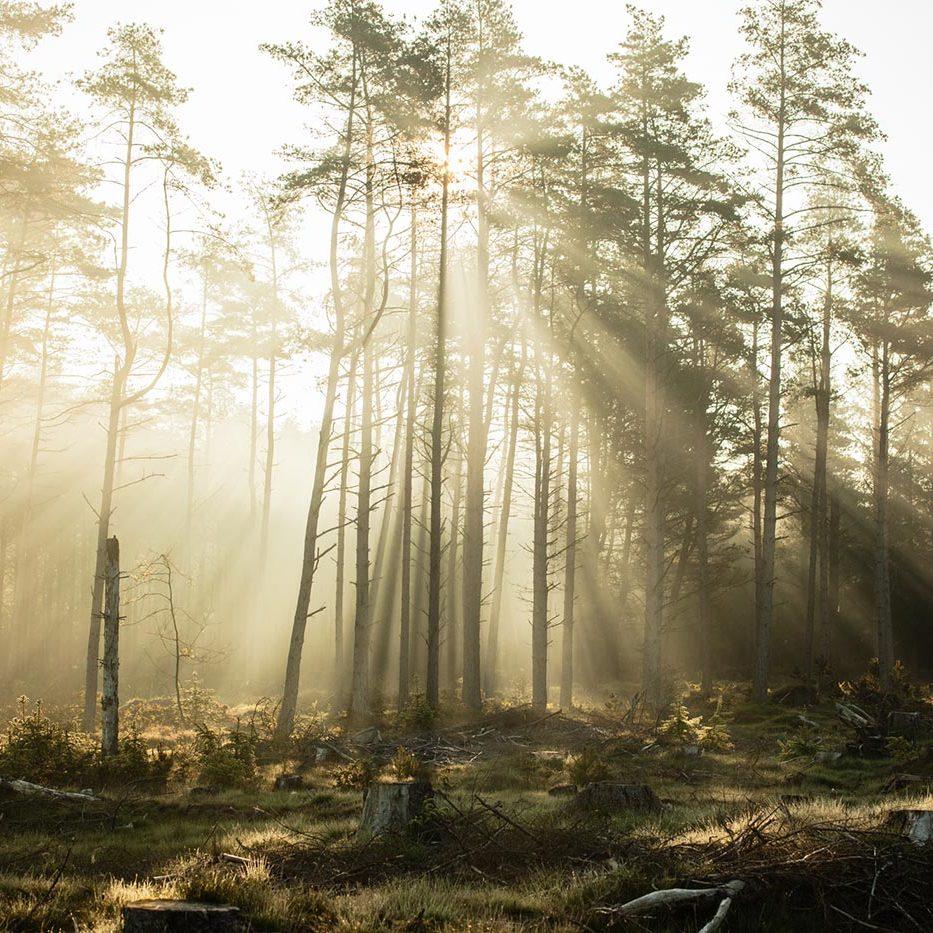 Solens stråler igennem træerne