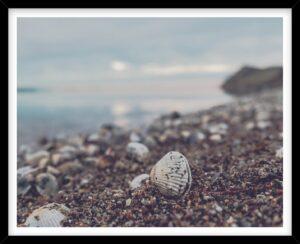 Hjertemusling ved Limfjorden på Mors