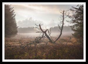 Forfaldent træ i dis i skoven, Nationalpark Thy