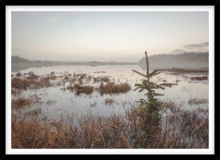 Grantræ i oversvømmet Nationalpark Thy