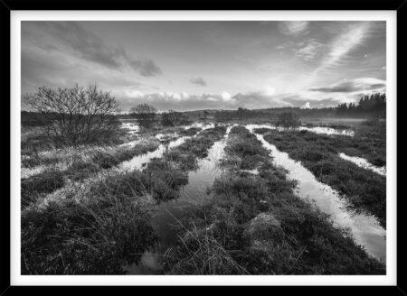 Linjer af Vand i Nationalpark Thy, sort hvid fotografi