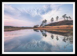 Træer spejlet i sø i Nationalpark Thy